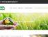 Como hacer un diseño web profesional